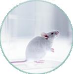Transgenitc Mouse Core